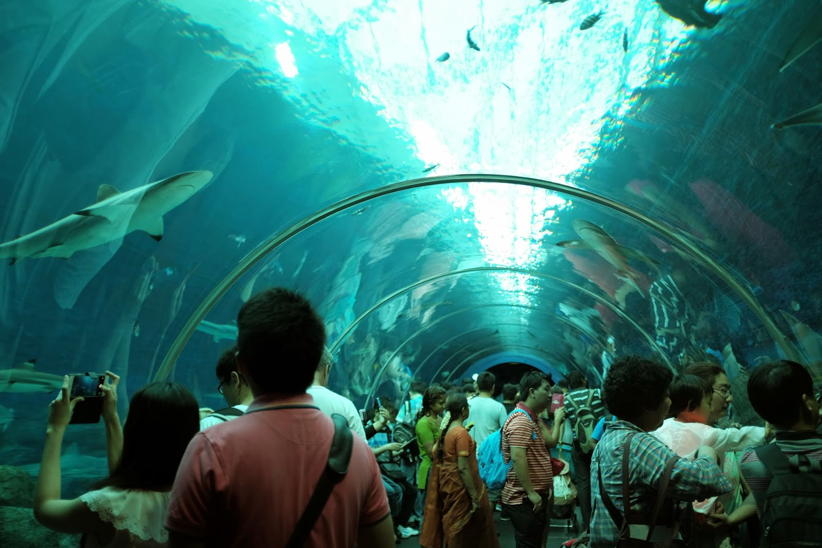Fish aquarium in sentosa - At The Entrance You Ll Go Through A Tunnel Where You Can See Sharks Swimming By Photography Within Aquariums Is A Big Challenge Fishes Swim Fast So You Ll